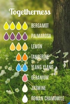 Togetherness - Essential Oil Diffuser Blend