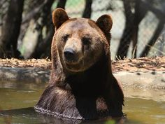 You Have to Watch This Heartwarming Story About Ben the Bear. (Happy ending) - PHUNRISE