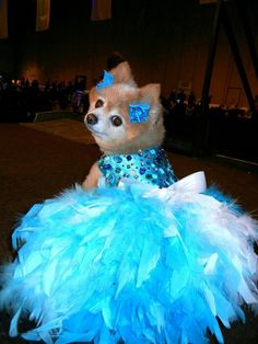 Turquoise Bling Satin Feather Harness Dog Dress - Wedding on Etsy, Halloween Games Adults, Halloween Costumes For 3, Halloween Party Games, Kids Party Games, Diy Halloween, Group Halloween, Party Fun, Party Ideas, Knight Halloween