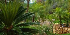 Subtropical planting- cycads and small palms.