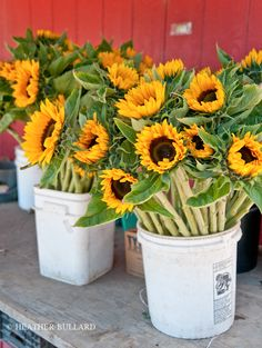 farm stand sunflowers