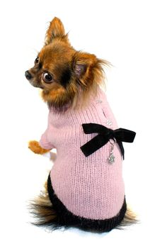 Classic Coco Sweater by Hip Doggie on @HauteLook