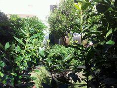 Scorcio Garden, Plants, House, Garten, Home, Lawn And Garden, Gardens, Plant, Gardening
