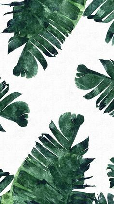 Tropical leaves iPhone wallpaper More Tropical Summer Desktop wallpaper – Summer computer…Tropical flowers and leaves vintage by mystel on…tropical Split Leaves plant botany watercolour… Iphone Wallpaper Tropical, Leaves Wallpaper Iphone, Plant Wallpaper, Aesthetic Iphone Wallpaper, Screen Wallpaper, Aesthetic Wallpapers, Watercolor Wallpaper Iphone, Pattern Wallpaper Iphone, Iphone Wallpaper Vintage Hipster