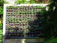 Need To Create A Wall Garden For Deck Wall....hmmmmm