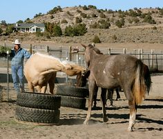 Good Horse Management and Pasture Practice