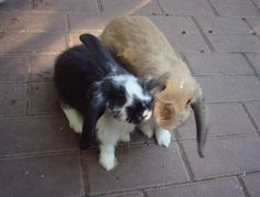 Bunnies kiss for the camera - September 20, 2012