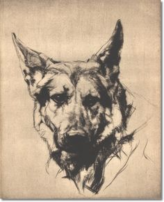 Hutchinsons Book Of The Dog - German Shepherd from Hutchinson's Illustrated Dog Encyclopedia 1934 Painting
