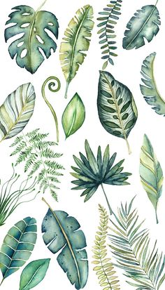 Watercolor Leaves, Tropical Clipart, Tropical Leaves, Monstera, Palm Leaves, Jungle Plants, Greenery, Safari Png, Modern Clipart, Botanical
