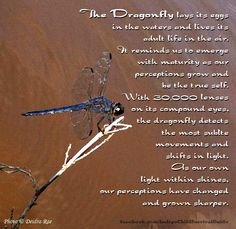 The Dragonfly reminds us to shift with our light as our perceptions grow. Dragonfly Meaning, Dragonfly Art, Dragonfly Quotes, Wiccan, Magick, Pagan, Bernardo Y Bianca, Spiritual Animal, Animal Spirit Guides