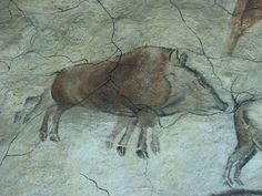A boar from the model of the ceiling of Altamira, in the Brno museum Anthropos, Santillana del Mar, Spain