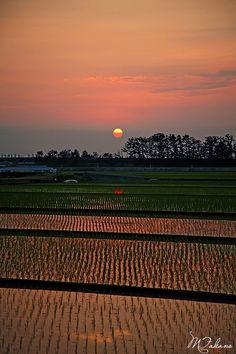 Sunset in rice field, Toyama, Japan Nagoya, Yokohama, Beautiful World, Beautiful Places, Kyoto, Nature Photography, Travel Photography, Sea Of Japan, Toyama