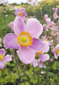 Des fleurs à profusion… quel jardinier ne se damnerait pas pour cela ? Mais voilà, il faut compter avec le casse-tête de la saison sèche. Voici une sélection de plantes qui se moquent de l'arrosage comme de leur première feuille. Et toutes nos astuces pour gérer l'eau au mieux.