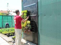 BGreenpark> Green wall: making of! Изграждане на зелена (жива) стена #greenwall #LivingWall #VerticalGarden