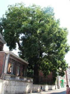 merkwaardige bomenwandeling-leuven -3.15km