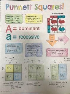 Genetik: Punnett Square Doodle Notes - NGSS von Strankles Science Source by thekaylajanae Biology Classroom, Biology Teacher, Science Biology, Teaching Biology, Life Science, Ap Biology, Forensic Science, Computer Science, High School Biology