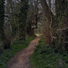 Path through Thorncombe Wood to Thomas Hardy's Cottage, Higher Bockhampton, Dorset . Walk In The Woods, English Countryside, British Isles, Pathways, Wonders Of The World, Britain, Beautiful Places, Places To Visit, Country Roads