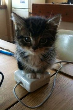 Kitten Warmer! Look at it! look!