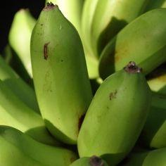 Les Principales conclusions rapide Parmi intérêt Que la Découverte d'alimentation juin Avec nain vert farine de banane may l'empêchent l'inflammation intégration ...