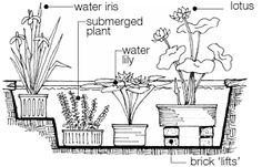 How to make your own container pond -- Campus Environmental Center Patio Pond, Pond Landscaping, Ponds Backyard, Water Garden Plants, Pond Plants, Water Gardens, Indoor Plants, Container Pond, Outdoor Ponds