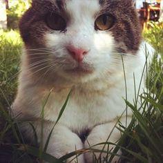 Instagram Cats | #instacats