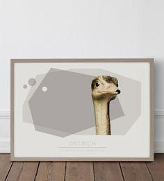 Ostrich 50*70 cm