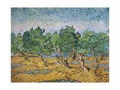 Olive Orchard, Violet Soil Giclee Print by Vincent van Gogh at Art.com