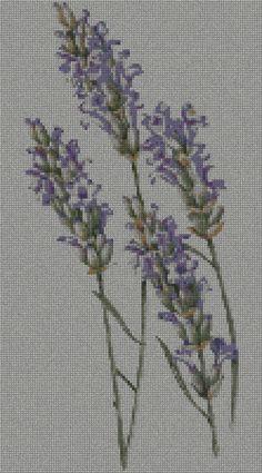 schemi_misti/fiori/lavanda_01s.jpg