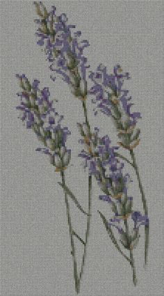 lavender free chart. click on link directly below picture