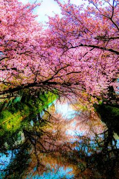 ✯ The Season of Cherry Blossoms Hanami Festival Pretty Pictures, Cool Photos, Beautiful World, Beautiful Places, Foto Nature, Nature Scenes, Amazing Nature, Belle Photo, Beautiful Landscapes