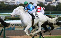 White Dragon Horse Pedigree