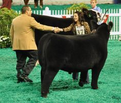 Bailey Kroupa shares her secrets to showring success with Sure Champ Livestock Judging, Showing Livestock, Guinea Pig Care, Guinea Pigs, Wedding Art, Wedding Humor, Show Steers, Senior Year Pictures, Show Cattle
