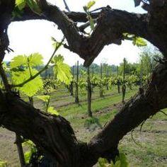 Megavino  2015. #wine #megavino#brussels
