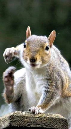 Nuts????  Hold on... I'll be right there... ❊
