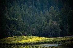 La Crema's Anderson Valley Vineyards