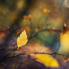 He who works with his hands and his head is a craftsman on Modern Mural Seasons Of The Year, Days Of The Year, Fall Highlights, October Country, Autumn Scenes, Yellow Leaves, Stay The Night, Autumn Leaves, Nature Photography