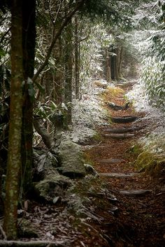 Snow Trail (to the chimneys?), The Smokey Mountains, Tennessee  .....wish I was there
