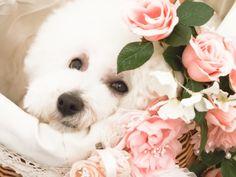 flower bed!!!!