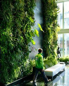 Natura Towers - Philodendron giganteum | Vertical Garden Design