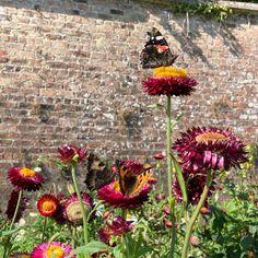 Killruddery Butterflies last flutter of autumn #dublin #brey #nofilter #discoverireland Dublin, Butterflies, Ireland, Autumn, Plants, Instagram, Fall Season, Butterfly, Fall