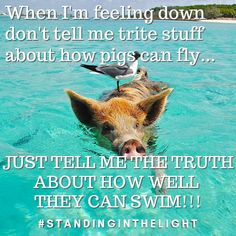 When I'm feeling down don't tell me trite stuff about how pigs can fly. just tell me the truth about how well they can swim! Feeling Down, Tell Me, Pigs, Swimming, Canning, Feelings, Swim, Pork, Home Canning