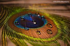 Peacock feathers by Beatriz Montero Photography on Radhe Krishna Wallpapers, Lord Krishna Hd Wallpaper, Love Images, Beautiful Pictures, Deadpool Hd Wallpaper, Peacock Photos, Bal Krishna, Best Background Images, Radha Krishna Pictures