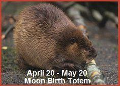 Animal Birth Totems | Balanced Women's Blog Animal Spirit Guides, Spirit Animal, Power Animal, Totems, Brown Bear, Birth, Blog, Animals, Totem Poles