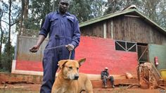 WHO Launches Global Campaign to Eliminate Rabies !   - Dogs at Kenya's KSPCA, which deals regularly with cases of rabies, get checked under a vaccination initiative. (H. Heuler/VOA News)