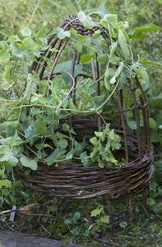 Use versatile willow to create stylish structures for your garden. Here are   some fine examples to inspire.