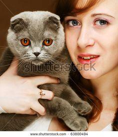 Scottish Fold Cat Head Stock Photography | Shutterstock