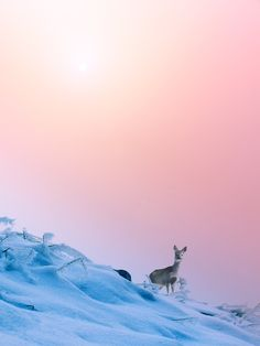 deer snow stock photo