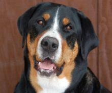 Stacey Mae, 2011 Hero Dog Winner - Therapy Dog