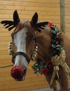 dress your horse as rudolph the red nosed reindeer for christmas attach bells along the sides of your horses harness with tape or string - Horse Christmas Decorations