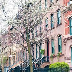 Perry Street juega con nosotros a #colorsoloparamirosa Me sorprendió NY con todos sus árboles en flor de color... rosa! Tienen alguna recomendación para hacer en la ciudad? Algún datazo imperdible? Dejé mucho del recorrido de ayer en los stories y un vivo en @anthropologie  #colorsoloparami#nyc#perrystreet#soloparamiviajes